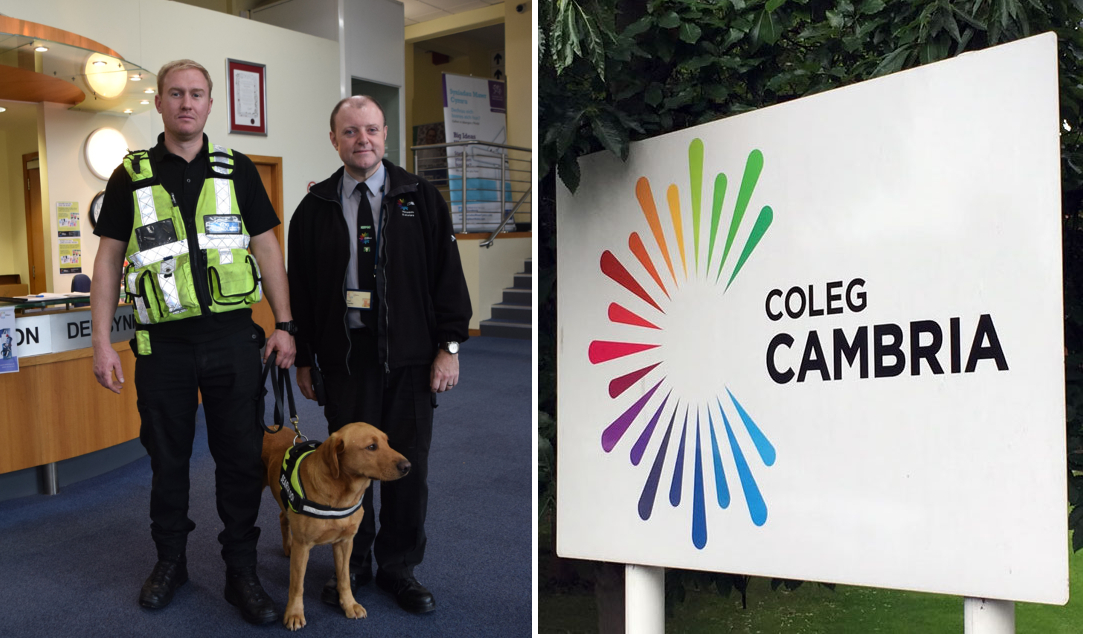 Over 800 students screened in drugs detection operation at Coleg Cambria