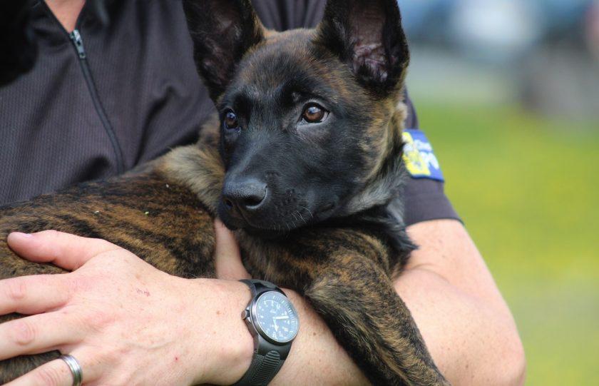 Puppy Patrol - Meet the latest four-legged police recruits
